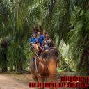 Day-4---Jungle-Trekking-11