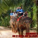 Day-4---Jungle-Trekking-12