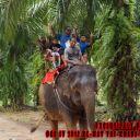 Day-4--Jungle-Trekking-9