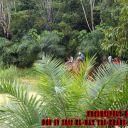 Day-4---Jungle-Trekking-10