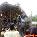 remy-riding-a-elephant