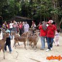 feed-the-deer