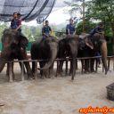 Elephant-show2